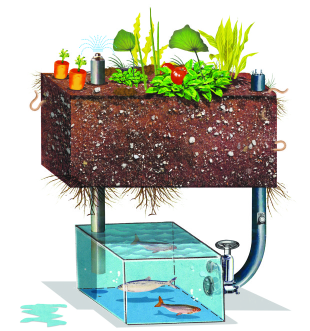 aquaponics_MB_Make_03.13.2015