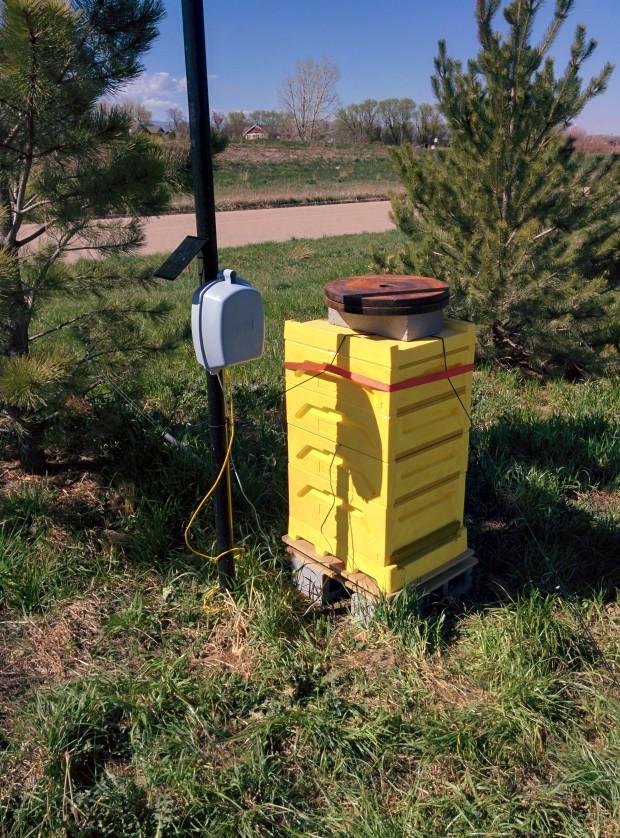 Digital beehive