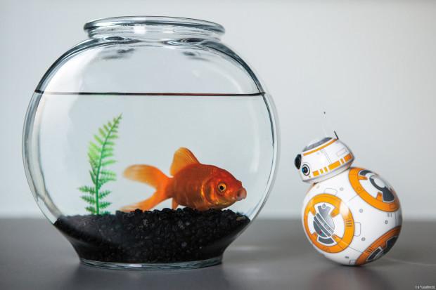 Goldfish and BB-8