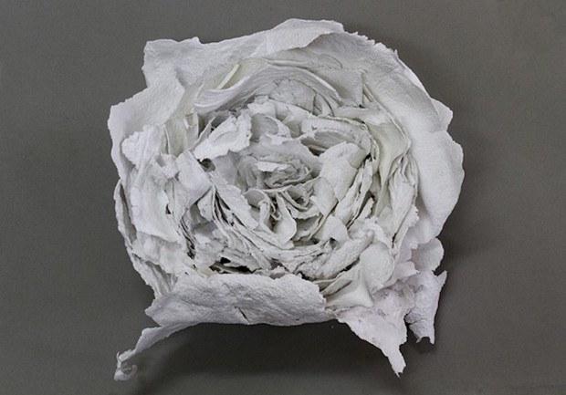 salt rose
