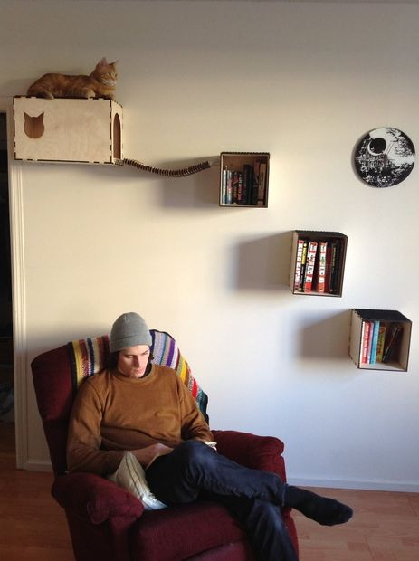 cathouse-shelves