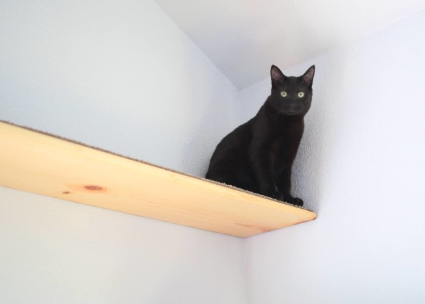 cat shelf 4