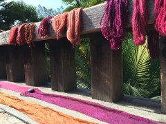 Skeins of yarn dyed with cochineal, drying in the sun at a workshop at the UC Berkeley Botanical Gardens in Berkeley, California.