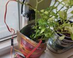 Simple Arduino-Controlled, No-Pump Plant Watering