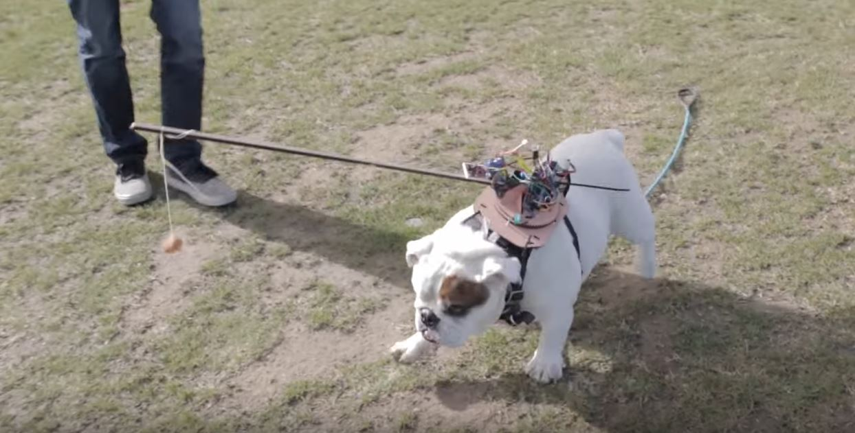 Hack Your Dog with Arduino-Driven Hot Dogs