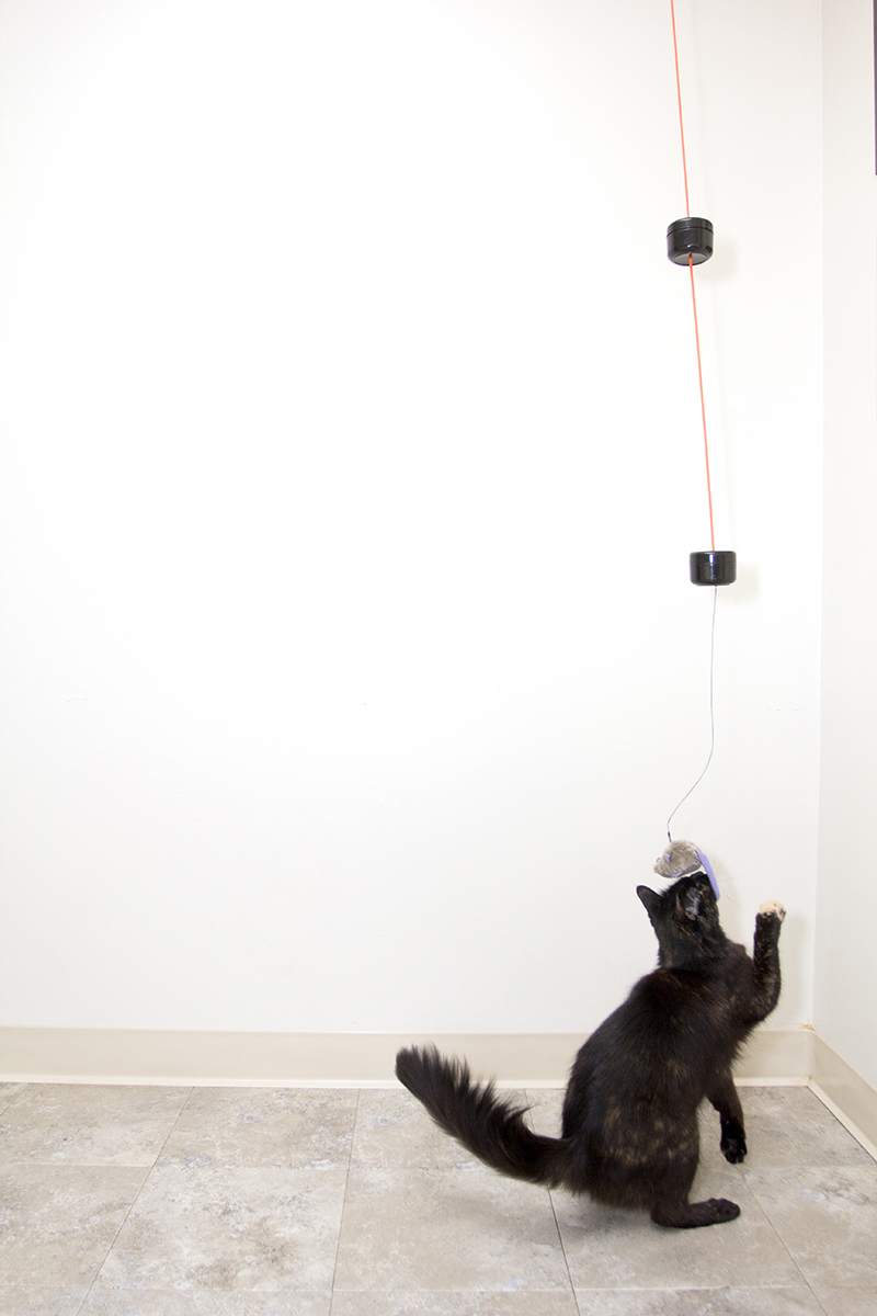 string up a simple chaotic double pendulum cat toy make