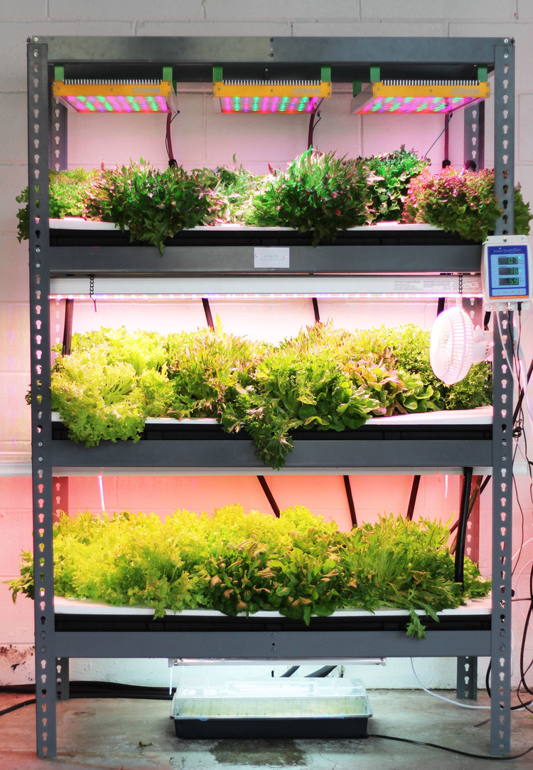 Edible Innovations: Going Vertical Is a Smarter Way to Farm