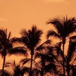 ハワイ9 夢はもう叶っている?