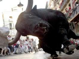tracer-bull indian politics