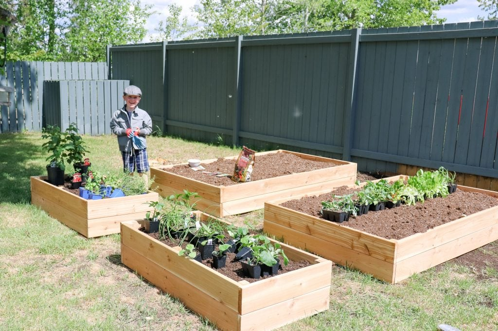 Planting Our First Vegetable Garden