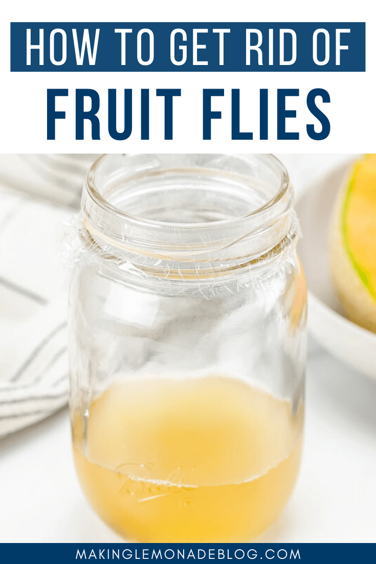How To Get Rid Of Fruit Flies The Best Homemade Fruit Fly Trap Making Lemonade