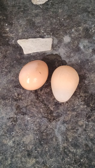 egg with no shell