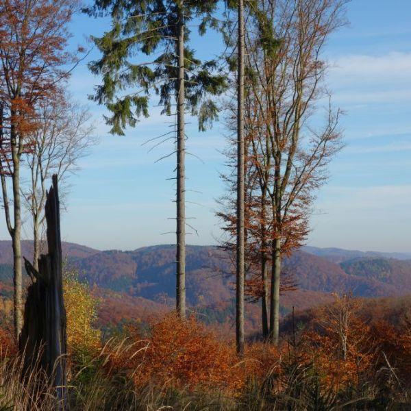 Wanderung auf dem Harzer Grenzweg am 01.11.2015