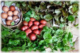 Solawi-Anteil im April