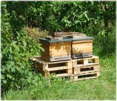 Unsere fleissigen Bienchen