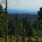 Bergpanorama unterhalb des Brockengipfels