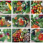 Solawi-Gemüse Juli 2016