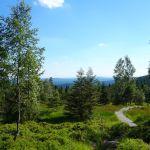 wunderschöner Weg zur Leistenklippe hinauf durch Hochmoorgebiet