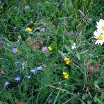 Flora und kleine Fauna