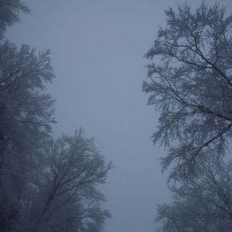 Nebelwald und Rauhreif zwischen Seesen und Lautenthal