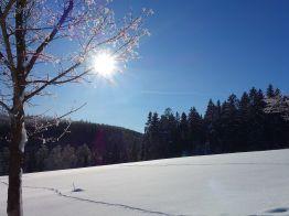 """unberührte Schneedecke und herrliche Sonne auf dem """"Streitkopf"""" oberhalb von Sorge"""