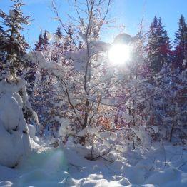 winterlicher Wegesrand im Grenzmuseum Sorge