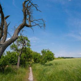 """Auch das ist der (Ost-)Harz: weite Felder und Wiesen auf dem Weg zu den """"Glockensteinen"""", St. 198, bei Nordhausen am südlichen Harzrand"""