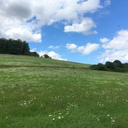 Auch das ist der (Ost-)Harz: weite Wiesen im August