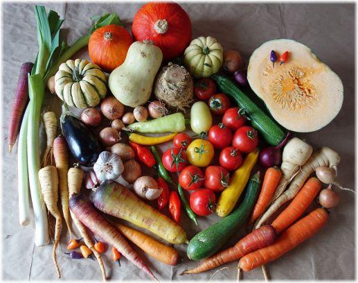 Ein Teil meiner SoLaWi-Gemüseernte aus dem September, der für die Weiterverarbeitung vorgesehen ist