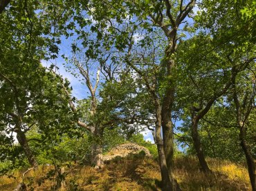 Burgruine Anhalt oberhalb des Selketales