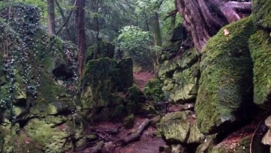 Photo of 18 photos from Puzzlewood shortly after Star Wars: Episode VII wrapped filming there!