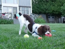 Ivy plays catch with me