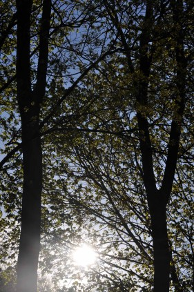spring_sightings_3