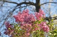 spring_sightings_5