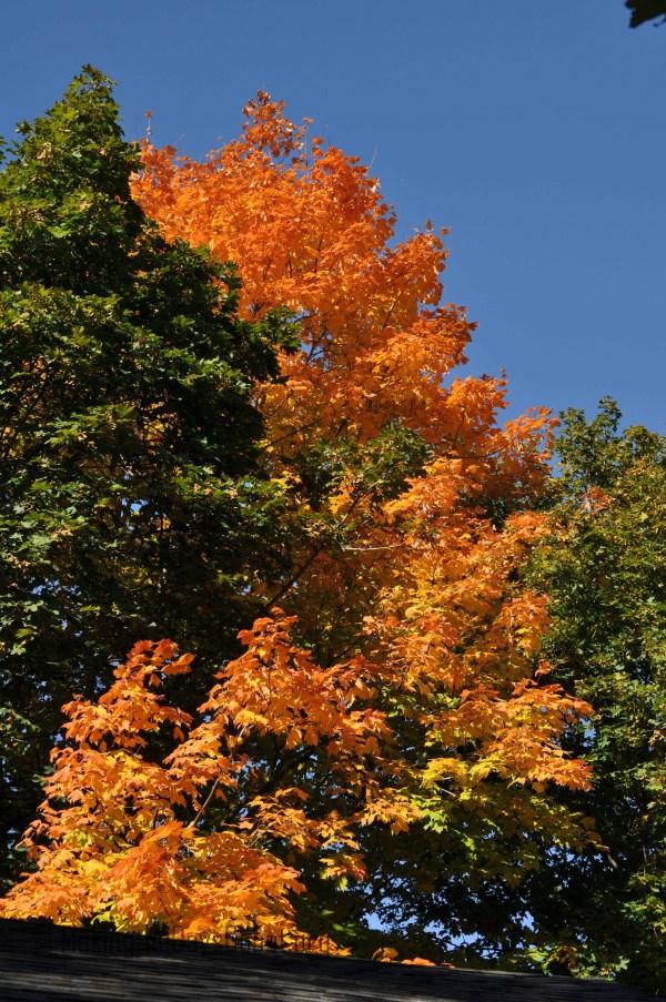 fall_2012_12