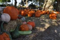 fall_2012_4