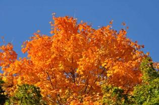 fall_2012_6
