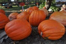 fall_2012_9