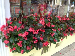 flower boxes outside the shops