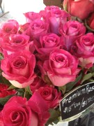 French market roses - all sorts of pinks