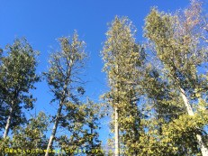 the trees and the BIG BLUE SKY