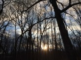 the sun sets though the trees - leaves are coming - Spring is here!