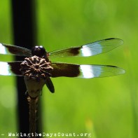 upclose_dragonfly
