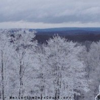 lovely snow covered trees and a view from the top of the hill - photo courtesy of O