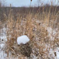 W^2 – prairie