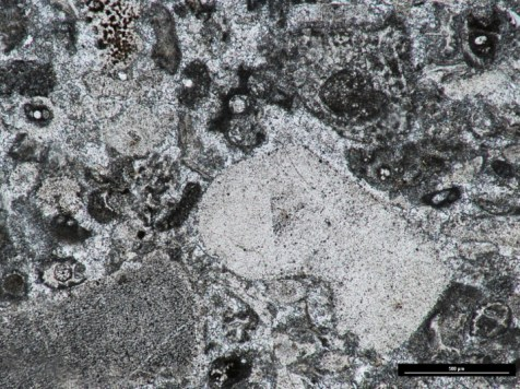 Thin section (ppl) of Armagh Limestone