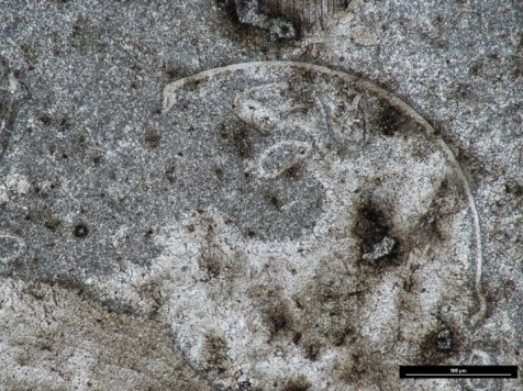 Thin section (ppl) of Clonony Limestone