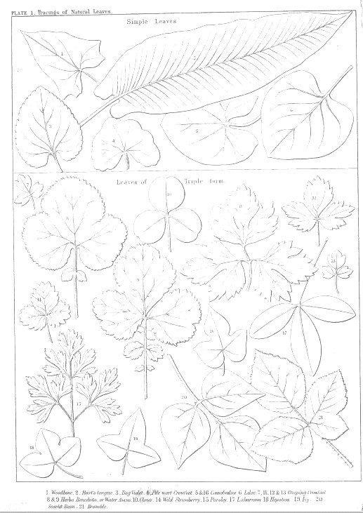 Tracings from Natural Samples, Colling vol. 2