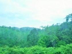 コタバル→クアラルンプールの景色