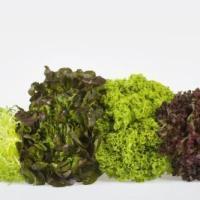 Salade met warme Kipfilet en Paprika